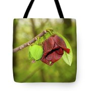 Tree Waking Up From Winter Tote Bag