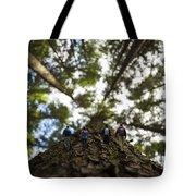 Tree Walkers Tote Bag