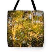 Tree With V Shaped Branches Tote Bag