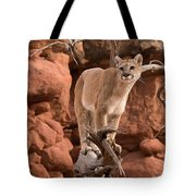 Treed Mountain Lion Tote Bag