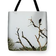 Trees 017 Tote Bag