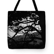 Trees Black And White - San Salvador Tote Bag