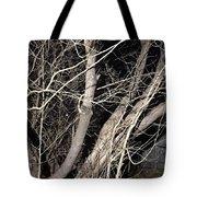 Trees Closeup Tote Bag