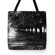 Trees In Chicago Tote Bag