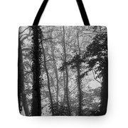 Trees In Mist Tote Bag
