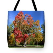 Tree's In The Forest 4 Tote Bag