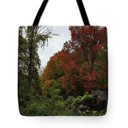 Trees Of Colorful Leaves In Autumn Mi Tote Bag