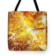 Trees Toward The Sun Tote Bag