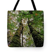 Trees Upward View Tote Bag