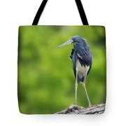 Tri-color Heron Tote Bag