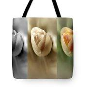 Tri Color Trio Tote Bag