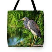 Tri-colored Heron At Sunset  Tote Bag