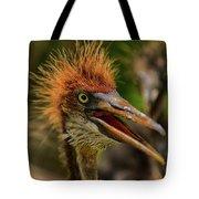 Tri Colored Heron Chick Tote Bag