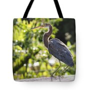 Tri-colored Heron Fledgling  Tote Bag