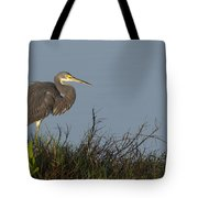 Tri-colored Heron In The Morning Light Tote Bag