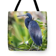 Tri-colored Heron On A Branch  Tote Bag