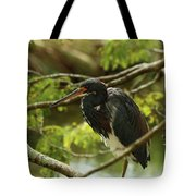 Tricolored At Rest  Tote Bag
