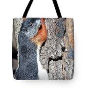 Tricolored Squirrel Tote Bag
