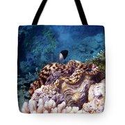 Tridacna Squamosa  Tote Bag