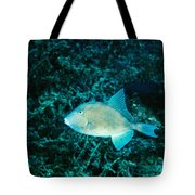 Triggerfish Swimming Over Coral Reef Tote Bag