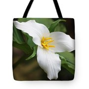 Trillum Wild Flower  Tote Bag