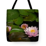 Trio Of Pink Lotus Waterlilies Tote Bag