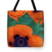 Trio Of Poppies Tote Bag