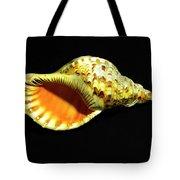Triton Trumpet Seashell Cymatium Tritonis Tote Bag