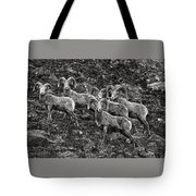 Trophy Rams Tote Bag