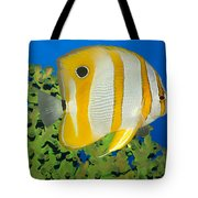 Tropical Fish Butterflyfish. Tote Bag