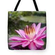 Tropical Night Flowering Water Lily Rose De Noche II Tote Bag