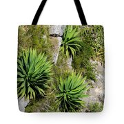 Agave Plants On Rocky Slope Tote Bag