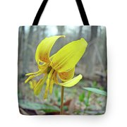 Trout Lily - Erythronium Americanum  Tote Bag