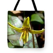 Trout Lily Tote Bag