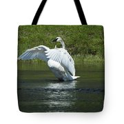 Trumpeter Swan On The Madison River Tote Bag