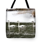 Trumpter Swans Panorama Tote Bag