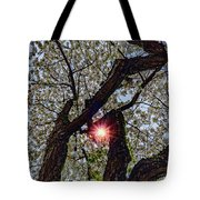 Trunk Of A Cherry Tree Blooming With White Flowers Tote Bag