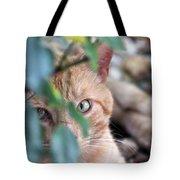 Tucker - The Cat Tote Bag
