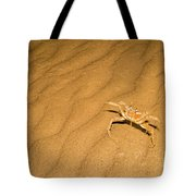 tufted ghost crab Ocypode cursor on sand Tote Bag