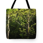 Branches Of Lovely Light Tote Bag