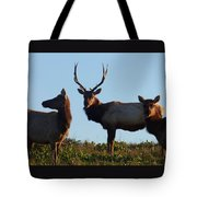 Tule Elk Bull And Harem Tote Bag