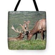 Tule Elk Bull Grazing In Meadow Tote Bag