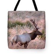 Tule Elk Bull In Grassland Meadow Tote Bag