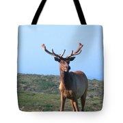 Tule Elk Bull In Grassland Near Drake's Bay Tote Bag