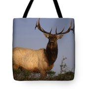 Tule Elk - Tomales Point Tote Bag