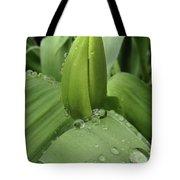 Tulip Bud 2 Tote Bag