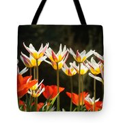 Tulip Field 11 Tote Bag