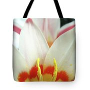 Tulip Flowers Art Prints 4 Spring White Tulip Flower Macro Floral Art Nature Tote Bag