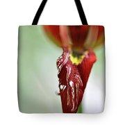 Tulip In Blossom 1 Tote Bag