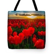 Tulip In Sunset Tote Bag